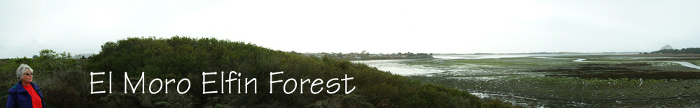 Forest and Bay